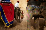 Amy stuck between elephants at Amber Fort, Jaipur.